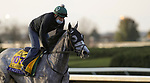 November 1, 2020: Tacitus, trained by trainer William I. Mott, exercises in preparation for the Breeders' Cup Classic at Keeneland Racetrack in Lexington, Kentucky on November 1, 2020. Carolyn Simancik/Eclipse Sportswire/Breeders Cup