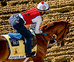 May 13, 2021: Forever Boss exercises for the Black-Eyed Susan Stakes at Pimlico Race Course in Baltimore, Maryland. Scott Serio/Eclipse Sportswire/CSM