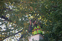 Keith Delozier of Springdale wraps holiday lights around a tree Tuesday Oct. 12, 2021 on the Fayetteville square. Delozier works for Fayetteville Parks and Recreation. The lights will be turned on Nov. 20. and will illuminate the square each evening from 5:00 p.m. to 1:00 a.m. The city uses more than 400,000 lights. The lights remain on through December 31. Visit nwaonline.com/210001013Daily/  (NWA Democrat-Gazette/J.T. Wampler)