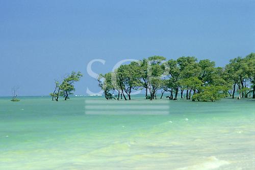 Itaparica Island, Bahia, Brazil. Blue sky, green sea, line of mangroves; waves breaking over the reef beyond.