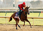 Dayatthespa, trained by Chad Brown and to be ridden by Ramon Dominguez , exercises in preparation for the 2011 Breeders' Cup at Churchill Downs on.October 30, 2011.