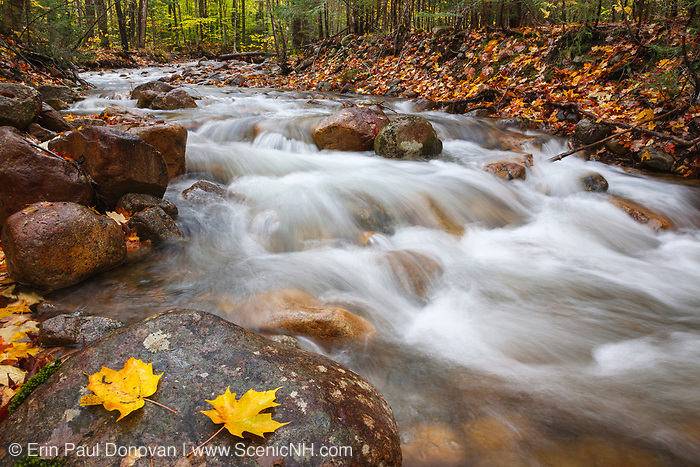 Hellgate Brook in the Pemigewasset Wilderness in Franconia, New Hampshire USA during the autumn months.