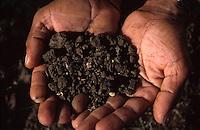 INDIA Madhya Pradesh, Kasrawad, biore project, organic farmer holds fertile soil in hands / INDIEN biore Projekt, Biolandwirt haelt fruchtbare Erde in der Hand