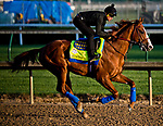 LOUISVILLE, KY - MAY 01: Justify, trained by Bob Baffert, exercises in preparation for the Kentucky Derby at Churchill Downs on May 1, 2018 in Louisville, Kentucky. (Photo by Scott Serio/Eclipse Sportswire/Getty Images)
