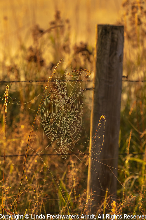 Orb spider web next to a barbed wire fence in northern Wisconsin.