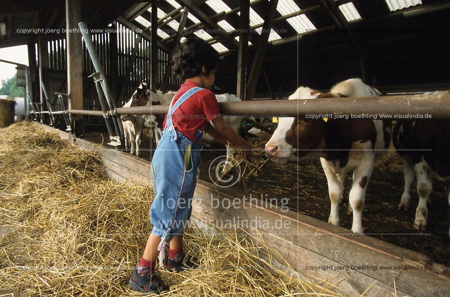 GERMANY, island Ruegen, organic farm, child feeds milk cows during vacations / DEUTSCHLAND, Bioland Betrieb Hofgut Bisdamitz auf Insel Ruegen , Rinder im Stall Kind fuettert Kuehe waehrend Hofbesichtigung