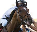20 March 2010:  Society's Chairman and Jockey Jose Lezcano winning the Appleton Stakes at Gulfstream Park in Hallandale Beach, FL.
