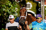 DEL MAR, CA  AUGUST 1:  #7 Shedaresthedevil, ridden by Florent Geroux, enters the paddock before the Clement L. Hirsch Stakes (Grade 1) Breeders Cup Win and You're In Distaff Division on August 1, 2021 at Del Mar Thoroughbred Club in Del Mar, CA.