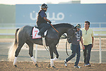 DUBAI,UNITED ARAB EMIRATES-MARCH 30: Pavel,trained by Doug O'Neill,exercises in preparation for the Dubai World Cup at Meydan Racecourse on March 30,2018 in Dubai,United Arab Emirates (Photo by Kaz Ishida/Eclipse Sportswire/Getty Images)
