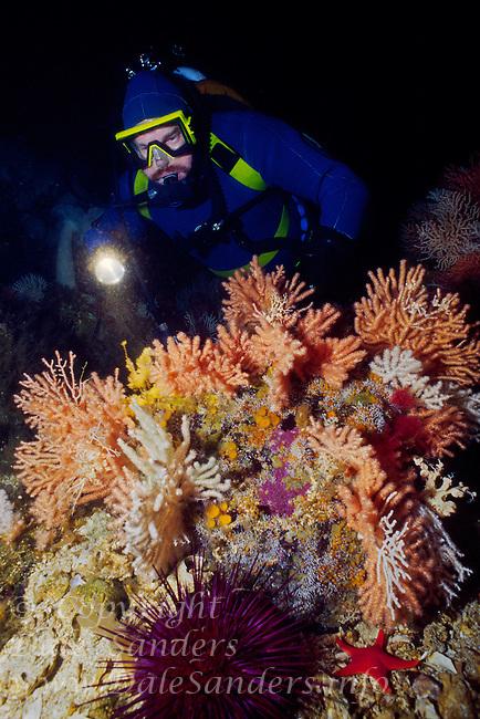 Diver in garden of Gorgonian Coral (Calcigorgia spicculiffera) in Queen Charlotte Strait off northern Vancouver Island, British Columbia, Canada.