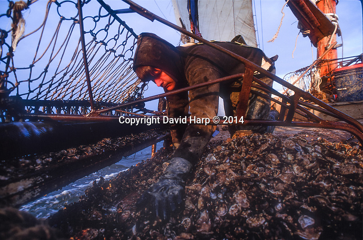 Wade Murphy III, seen here as a teenager in 1992,culls oysters aboard his dad's skipjack, the Rebecca T. Ruark.