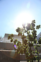 Tokyo records 35 degrees Celsius for six straight days