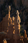 Fairyland Hoodoos, Bryce Canyon