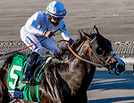 ARCADIA, CA - NOVEMBER 5: Tourist #5, ridden by Joel Rosario wins the the Breeders' Cup Mile during day two of the 2016 Breeders' Cup World Championships at Santa Anita Park on November 5, 2016 in Arcadia, California. (Photo by Eclipse Sportswire/Breeders Cup)