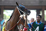 July 18, 2015: Dukin' With Dale, trained by John Servis, is one of seven contenders in the Kent Stakes. Syntax (IRE), Junior Alvarado up, wins the grade III Kent Stakes, one and 1/8 miles on the turf for 3 year olds at Delaware Park in Stanton DE.  Trainer is Bill Mott, owner is Randle Glosson.Joan Fairman Kanes/ESW/CSM