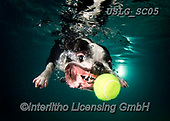 REALISTIC ANIMALS, REALISTISCHE TIERE, ANIMALES REALISTICOS, dogs, paintings+++++SethC_320B2491rev,USLGSC05,#A#, EVERYDAY ,underwater dogs,photos,fotos ,Seth