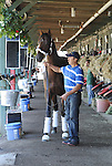 Kentucky Derby winner Orb arrives at the the Phipps Stable barn under the direction of trainer Shug McGaughey on August 11, 2013 at Saratoga Race Course in Saratoga Springs, New York.  (Bob Mayberger/Eclipse Sportswire)