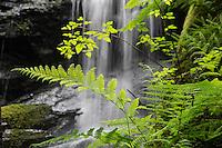 Waterfall along the Fern Canyon Trail, Russian Gulch State Park, California