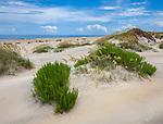 Pea Island National Wildlife Refuge, North Carolina<br /> Sculpted dunes of Pea Island, Cape Hatteras