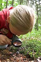 Mädchen, Kind betrachtet Losung, Kot vom Reh mit der Lupe, Capreolus capreolus, Spurensuche im Wald, Rehwild, Reh-Wild, roe deer