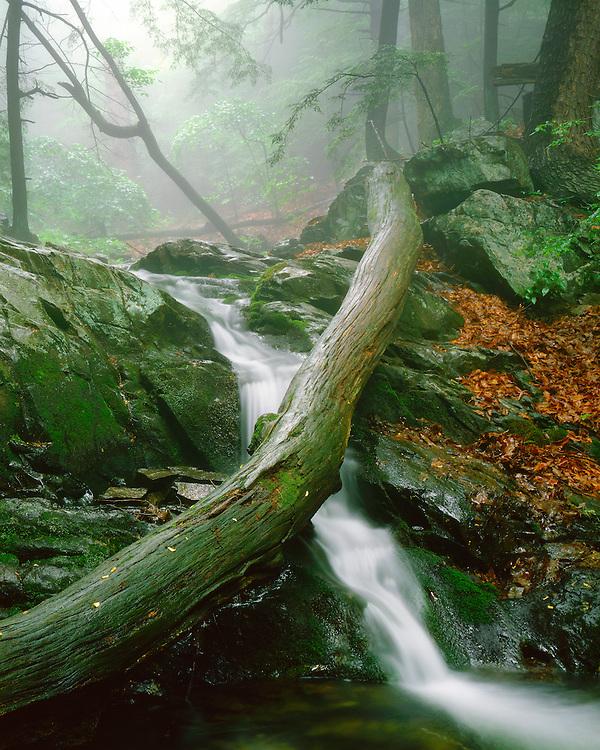 Foggy morning along a stream near Doyle River Falls; Shenandoah National Park, Virginia
