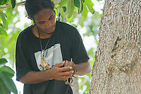 Timorese student Laca Ribeiro captures a tokay gecko, Gekko gecko, in a tree in the Liquica district of Timor-Leste (East Timor). He is participating in an ongoing survey of Timorese reptiles and amphibians.