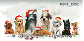 GIORDANO, CHRISTMAS ANIMALS, WEIHNACHTEN TIERE, NAVIDAD ANIMALES, paintings+++++,USGI2451,#XA# dogs,puppies