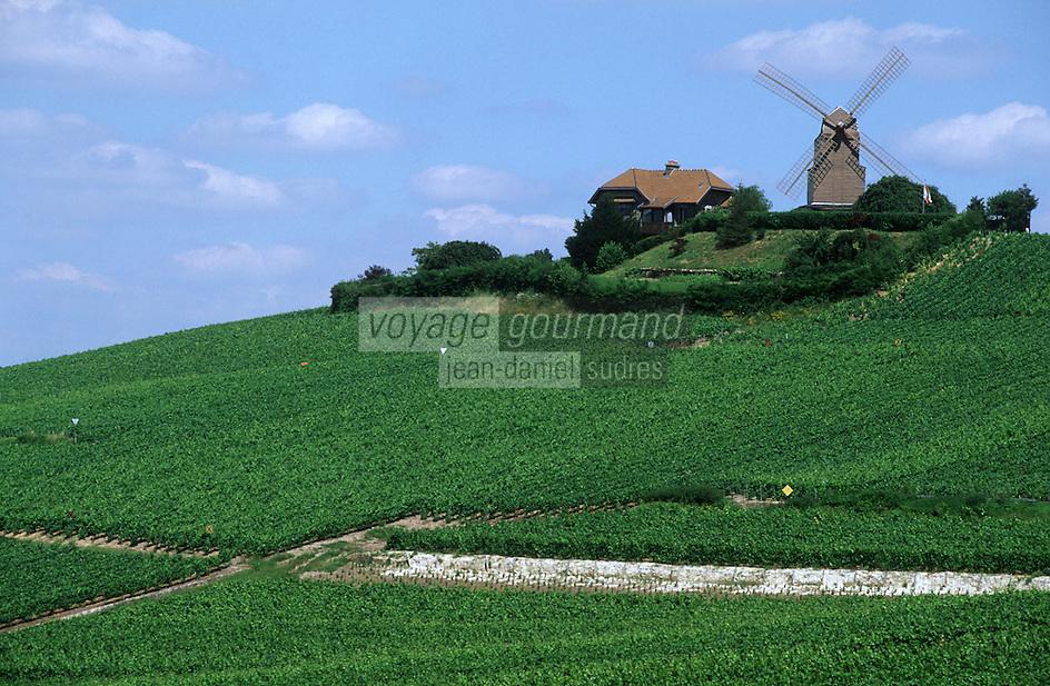 Europe/France/Champagne-Ardenne/51/Marne/Verzenay: le moulin à vent et le vignoble Champenois de la Montagne de Reims