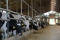 CROATIA, Osijek, dairy farm of Zito Group / KROATIEN, Osijek, großer Milchviehbetrieb der Zito Gruppe