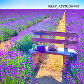 Assaf, LANDSCAPES, LANDSCHAFTEN, PAISAJES, cute animals, lustige Tiere, animalitos diver, photos,+Bench, Bunch Of Flowers, Childhood, Color, Colour Image, Cute, Floral, Flower, Flowers, Heart Shape Symbol, Hearts, Lavender,+Lavender Field, Love, Photography, Romace, Romance, Romantic, Sitting, Teddy Bear, Teddy Bears, Toy, Toys, Valentines,Bench,+Bunch Of Flowers, Childhood, Color, Colour Image, Cute, Floral, Flower, Flowers, Heart Shape Symbol, Hearts, Lavender, Laven+der Field, Love, Photography, Romace, Romance, Romantic, Sitting, Teddy Bear, Teddy Bears, Toy, Toys, Valentines+,GBAFAF20130708,#l#, EVERYDAY