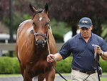 13 July 2010.  Jazil - Spanish Cat Colt sold for $210,000.   Jazil's oldest crop are yearlings of 2010.