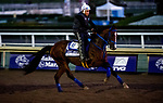 October 30, 2019: Breeders' Cup Dirt Mile entrant Mr. Money, trained by W. Bret Calhoun, exercises in preparation for the Breeders' Cup World Championships at Santa Anita Park in Arcadia, California on October 30, 2019. Michael McInally/Eclipse Sportswire/Breeders' Cup/CSM