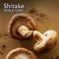 Shitake Mushroom Pictures | Shitake Food Photos Images & Fotos