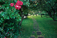 Path with roses, Vasskalven Island, Norway.<br /> <br /> Canon EOS 1, 24mm lens, Fuji Velvia film