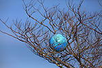 A plastic ball found its way up in a tree out of reach for any who decided to play with it in Mill Valley, California.