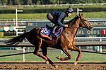 ARCADIA, CA  OCTOBER 30:  Breeders' Cup Filly & Mare Turf entrant Billesdon Brook, trained by Richard Hannon,  exercises in preparation for the Breeders' Cup World Championships at Santa Anita Park in Arcadia, California on October 30, 2019. (Photo by Casey Phillips/Eclipse Sportswire/CSM)