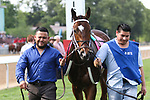 HOT SPRINGS, AR - April 14: Terra Promessa #1 walks in the infield paddock prior to the Apple Blossom Handicap at Oaklawn Park on April 14, 2017 in Hot Springs, AR. (Photo by Ciara Bowen/Eclipse Sportswire/Getty Images)