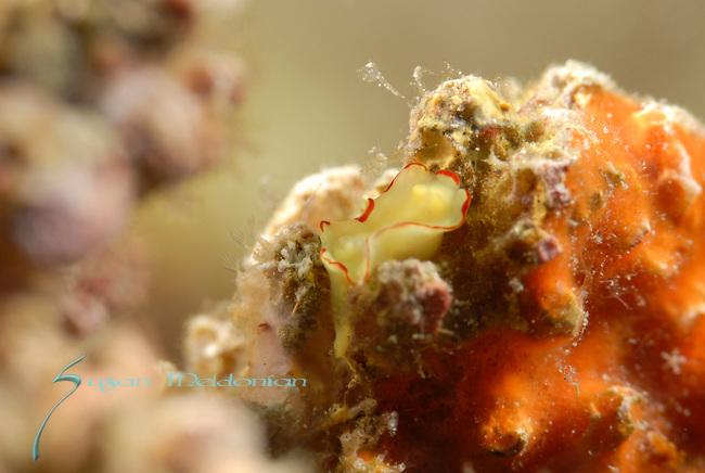Anilao, Batangas, Philippines, Amazing underwater Photography