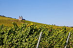 Europa, DEU, Deutschland, Rheinland-Pfalz, Mittelrheintal, Abtei St. Hildegard, Weinbau, Weinanbau, Rebbau, Natur, Umwelt, Landschaft, Landschaftsfotos, Landschaftsfotografie, Landschaftsfoto, Tourismus, Touristik, Touristisch, Touristisches, Urlaub, Reisen, Reisen, Ferien, Urlaubsreise, Freizeit, Reise, Reiseziele, Ferienziele, Ruedesheim am Rhein ist eine Weinstadt im hessischen Rheingau-Taunus-Kreis und liegt mit dem gegenueberliegenden Bingen am suedlichen Tor zum Mittelrheintal. Ruedesheim gehoert mit zum UNESCO-Welterbe Oberes Mittelrheintal. Die Abtei St. Hildegard ist ein Benediktinerinnenkloster in Eibingen bei Ruedesheim im Bistum Limburg. Seit 2002 ist die Abtei Teil des UNESCO-Welterbes Oberes Mittelrheintal.<br /> <br /> [Fuer die Nutzung gelten die jeweils gueltigen Allgemeinen Liefer-und Geschaeftsbedingungen. Nutzung nur gegen Verwendungsmeldung und Nachweis. Download der AGB unter http://www.image-box.com oder werden auf Anfrage zugesendet. Freigabe ist vorher erforderlich. Jede Nutzung des Fotos ist honorarpflichtig gemaess derzeit gueltiger MFM Liste - Kontakt, Uwe Schmid-Fotografie, Duisburg, Tel. (+49).2065.677997, ..archiv@image-box.com, www.image-box.com]