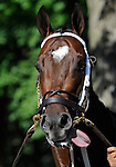 09 July 30: Enumerate prior to the 95th running of the grade 2 Sanford Stakes for two year olds at Saratoga Race Track in Saratoga Springs, New York.