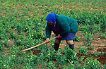 Woman working on field, near Paralimni, Cyprus, Zypern