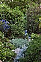 Buddha statue in California drought tolerant front yard garden with native manzanita, Ceanothus, Artemisia, Buckwheat; Vincent Garden