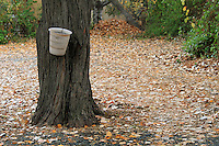 """Stock image of dry leaves fallen on ground around a tree on Troodos hills Cyprus.<br /> <br /> This image is also available in monochrome. View the gallery-""""Black & White Fine Art Images""""."""