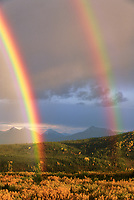 Double rainbow arcs over autumn colored boreal forest in Denali National Park.