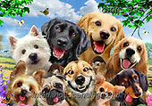 Howard, SELFIES, paintings+++++,GBHR895,#selfies#, EVERYDAY ,dogs, ,puzzle,puzzles