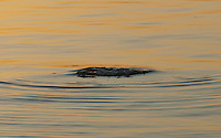 Sunrise ripples arise from an underwater shoal off Pookinmaa Island where Lyökki Daybeacon has warned of such lurking dangers since 1757 - Southwestern Finland