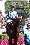 Capital Account in the paddock for the Pat O'Brien Stakes at Del Mar Race Course in Del Mar, California on August 26, 2012.