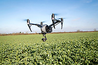 Drone flying over oil seed rape - Suffolk, March