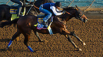 October 27, 2014:  Indianapolis, trained by Bob Baffert, exercises in preparation for the Breeders' Cup Xpressbet Sprint at Santa Anita Race Course in Arcadia, California on October 27, 2014. John Voorhees/ESW/CSM