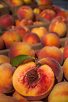 Peaches fresh for the farmers market harvested from an Ohio farm.